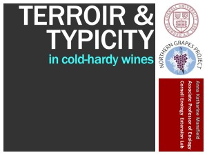Typicity webinar